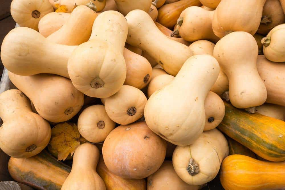 How To Choose The Best Butternut Squash