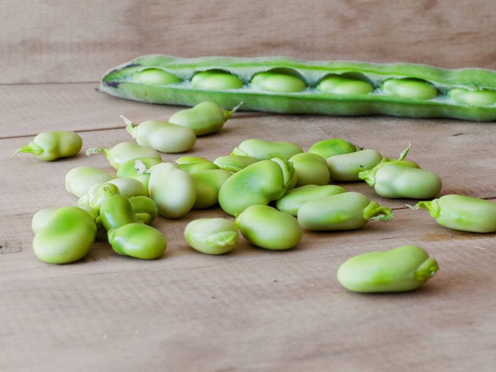 how to cook fresh lima beans
